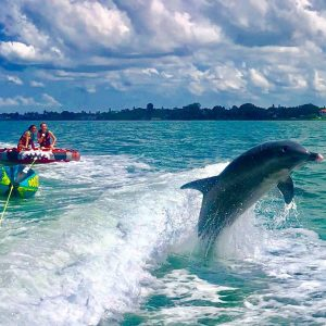 photo gallery tubing with dolphin